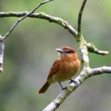 スピリチュアルから見て鳥はどのような意味があるのか。